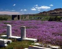 Greek Vacation in Delos Island At Spring Time (A Picture Taken By Henry Wu)greek vacation